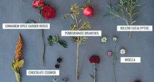 Seasonal Flower Guide: Fall