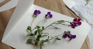 DIY Tutorial: Microwave Flower Pressing