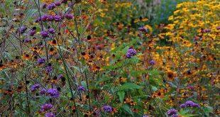 25 Beautiful Wildflower Field Ideas