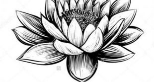 51 Ideas tattoo lotus flower black water lilies for 2019