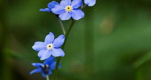 Loan Wild Flower