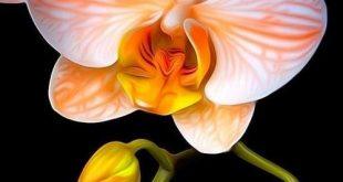 Orange+Mystique.jpg (500×744)