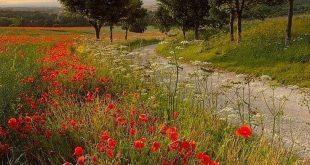 Photo - #countryside #photo - #countryside #festliche #Photo