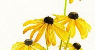 Yellow Black Eyed Susans Art Print - #