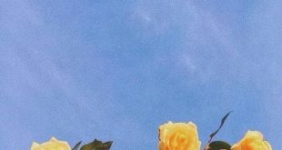 yellow roses #summer